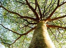 Träd med himmel på bakgrund Arkivbild