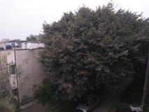Träd med hus arkivbilder