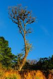 Träd med klar blå himmel Royaltyfri Foto