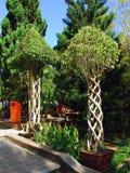 Träd med lockiga stammar Fotografering för Bildbyråer