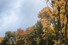 Träd med mång--färgade sidor i höst Royaltyfri Foto