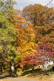 Träd med mångfärgad nedgånglövverk, på en solig höstdag i Sleepy Hollow, Upstate New York, NY, USA arkivfoto