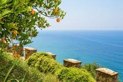 Träd med mogna apelsiner på bakgrunden av havet Arkivbild