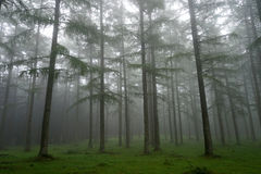 Träd med morgondimma Fotografering för Bildbyråer