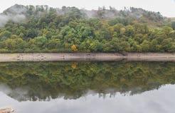 Träd med morgonmist, reflekterade i vatten, Autumn Fall Royaltyfria Foton