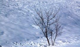Träd med nakna filialer på snö Arkivfoton