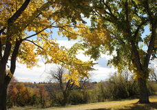 Träd med nedgångfärger Fotografering för Bildbyråer