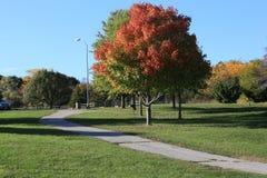 Träd med nedgångfärger Arkivfoton
