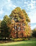 Träd med nedgånglövverk royaltyfri fotografi