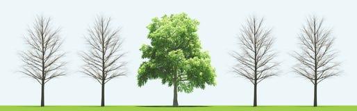 Träd med och utan sidor, 3d framför illustrationen Royaltyfri Fotografi