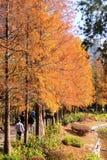Träd med röda och gula sidor på Tsing Yi Park Royaltyfri Bild
