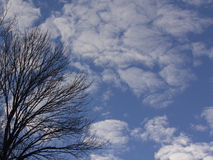 Träd med röjningvinterhimmel royaltyfria foton