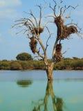 Träd med redet Arkivfoton