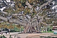 Träd med rika filialer arkivfoto