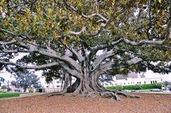 Träd med rika filialer royaltyfria foton