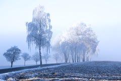 Träd med rimfrost Royaltyfri Fotografi
