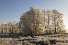 Träd med rimfrost på en iskall vintermorgon i den varma morgonen Arkivfoto