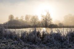 Träd med rimfrost på en iskall vintermorgon och ett djupfryst damm Royaltyfri Bild