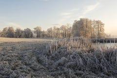 Träd med rimfrost på en iskall vintermorgon och ett djupfryst damm Arkivfoton