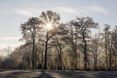 Träd med rimfrost på en iskall vintermorgon som solen skiner till och med Royaltyfri Bild