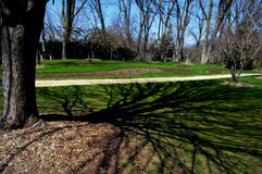 Träd med skuggor royaltyfri bild