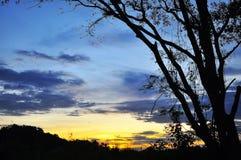 Träd med skymning Royaltyfria Bilder