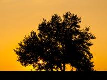 Träd med solen och röd gul himmel för färg Arkivfoton