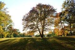 Träd med solljus Royaltyfri Bild