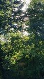 Träd med solljus Arkivfoton