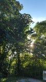 Träd med solljus Arkivbilder