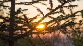Träd med solnedgångbakgrund Arkivfoto