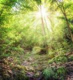 Träd med solsken i lös skog Arkivfoton