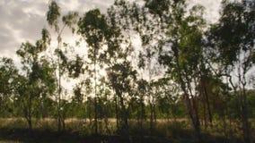 Träd med solstrålar och det gräs- fältet lager videofilmer