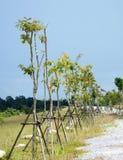 Träd med stöttan Arkivbild