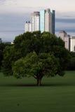 Träd med staden i bakgrund Fotografering för Bildbyråer