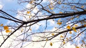 Träd med stupade sidor på bakgrunden av den molniga himlen arkivfilmer