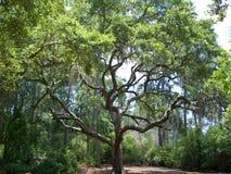 Träd med teckenet Royaltyfri Bild