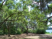 Träd med teckenet Arkivbilder