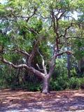 Träd med teckenet arkivfoton