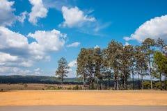 Träd med torr jordning fotografering för bildbyråer