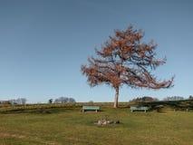 Träd med två bänkar i bygden arkivfoton