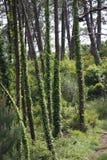 Träd med växter Royaltyfri Bild