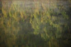 Träd med vattenreflex Fotografering för Bildbyråer