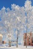 Träd med vit frost i frostigt väder Vinter Arkivbild