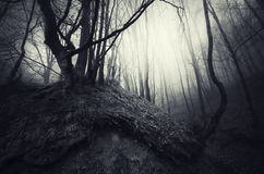 Träd med vridet rotar i spökad skog Arkivfoton