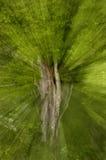 Träd med zoomeffekt Arkivfoton