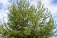 Träd mot arkivbilder