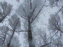Träd mot bakgrund av fallande snö stock video