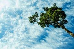 Träd mot bakgrunden av en blå himmel royaltyfri foto