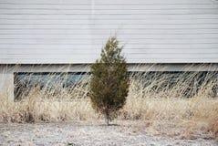 Träd mot betongväggen Arkivfoto